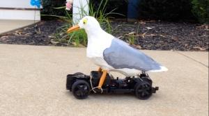 scuttlecam